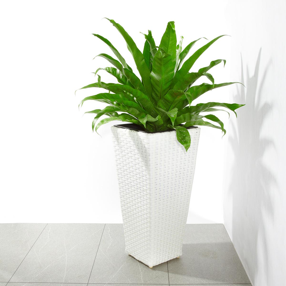 Pflanzkübel Polyrattan für innen und außen, 28 x 28 x 60 cm, weiß ...