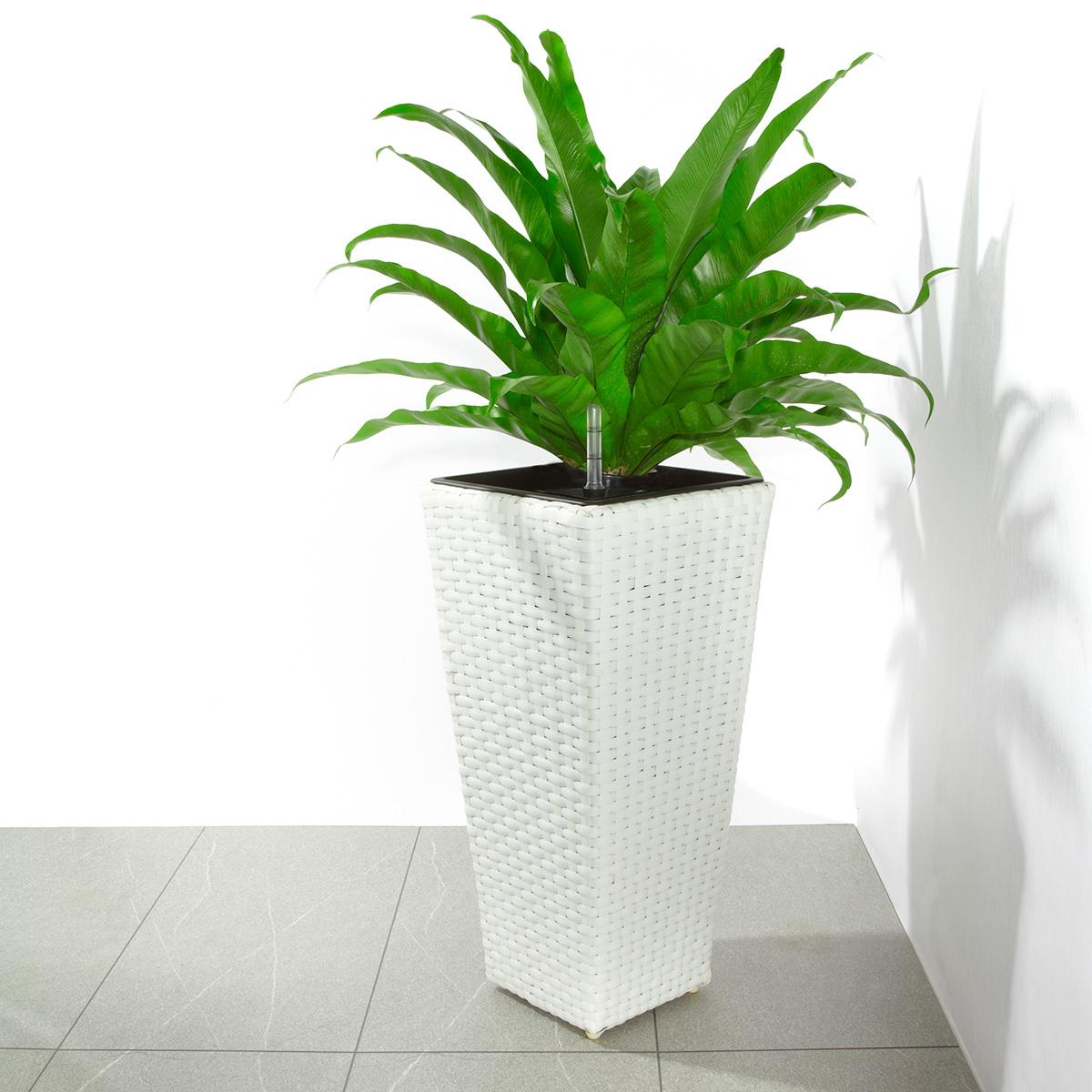 Pflanzkübel Polyrattan mit Bewässerungssystem, für innen und außen ...